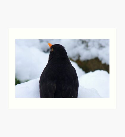 Where to next with all the snow! - Black Bird - NZ - Southland Art Print