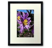 The Colour Lilac- Michaelmas Daisy - Southland Framed Print