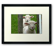 Do we look like Twins! - Lamb - NZ - Southland Framed Print
