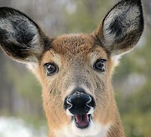 Faces of Deer Series #1 by Joe Thill