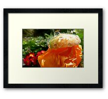 The Shower Cap - Orange Poppy - NZ - Southland Framed Print