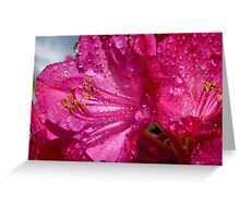 After a shower!  - Rhododendron - NZ - Southland Greeting Card