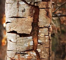 Cracking tree bark by SammyPhoto