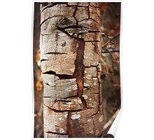 Cracking tree bark Poster