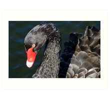 Grace! - Graceful Black Swan - NZ - Southland Art Print
