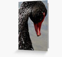 I'm Graceful! - Black Swan - NZ - Southland Greeting Card