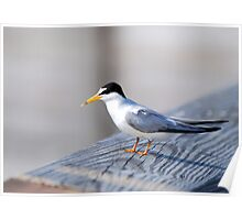 Flatfoots are Terns Poster