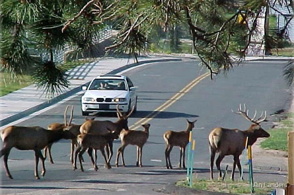 Elk Crossing by Jan Landers