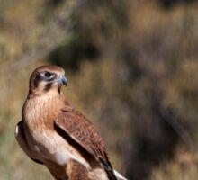 Brown Falcon - Alice Springs Desert Park - Alice Springs Sticker