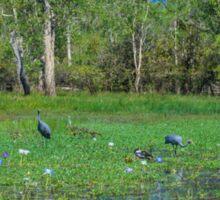 Yellow Water Billabong - Cooinda - Kakadu National Park Sticker