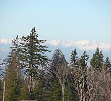 Washington's Olympic Mountains as seen from the Issaquah Highlands by pinklilypress
