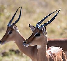 African Impala by Marylou Badeaux