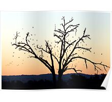 Tree silhouetted birds Poster