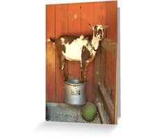 Goofy Goat Greeting Card