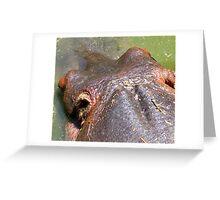 HIPPO HEAD PHOTO Greeting Card
