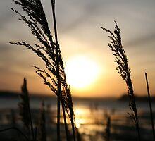 sunset grass by dawid
