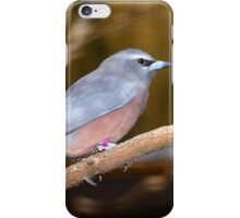 White-browed Wood Swallow iPhone Case/Skin