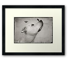 Remembering Butch Framed Print