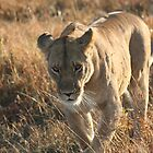 On the prowl. by stewartshang