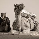The Camel Driver by Heather Prince ( Hartkamp )