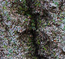Tree Bark 2 by SCRTSQRL
