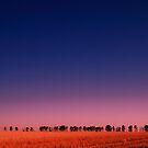Windbreak at dusk by Naomi Brooks
