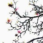 Magnolia abstract by ctsang