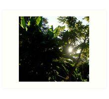 Glimmer of Sunlight. Art Print