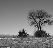 Solo in the country by cmcmillin77