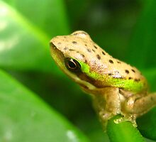Planet awareness  spot the frog by Belinda Cottee