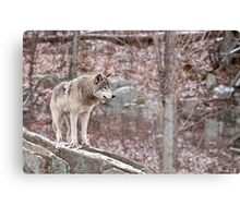 Timber Wolf on Outcropping Canvas Print