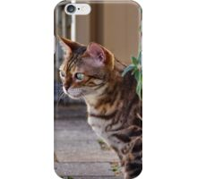 Ziggy at the Catnip Plant iPhone Case/Skin