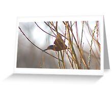 Kingfisher (flight) Greeting Card