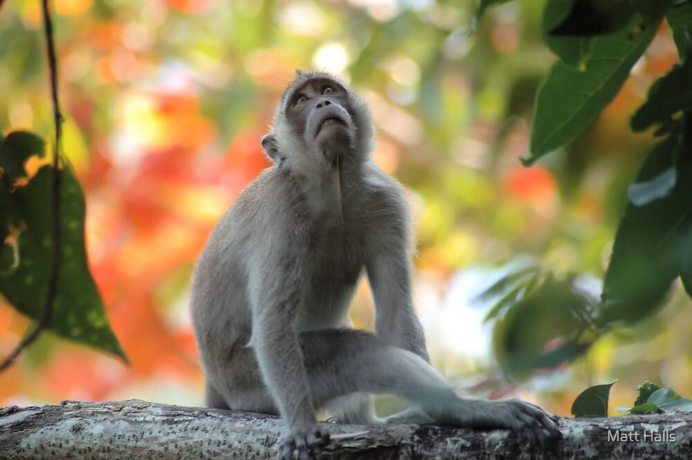 Monkey Daydreams by Matt Halls