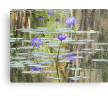 Water Lilies at Cape River Metal Print