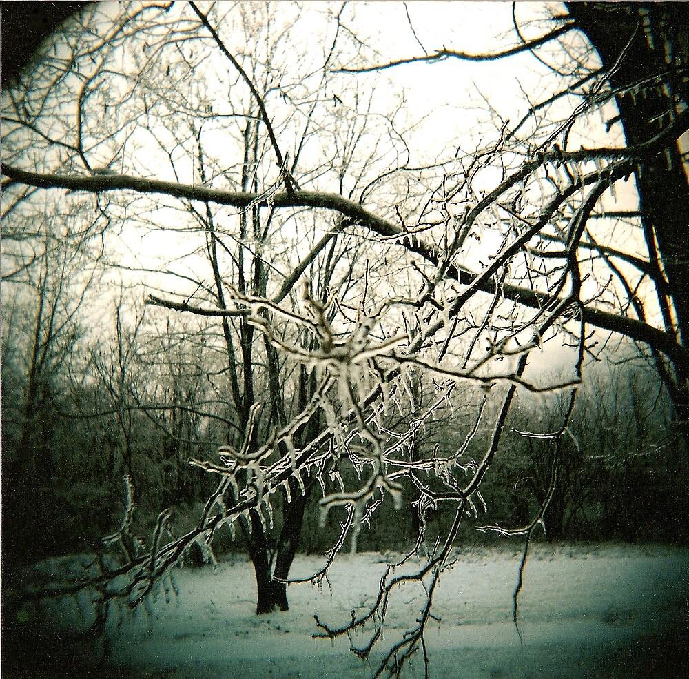 holga winter by rakastajatar