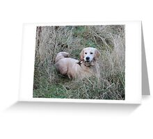 Dog in his fields Greeting Card