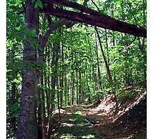 natural archway Photographic Print