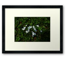 0334 - HDR Panorama - Ground Blooms Framed Print