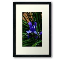 0336 - HDR Panorama - Iris 2 Framed Print