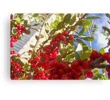 berry Canvas Print