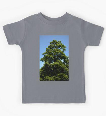 0350 - HDR Panorama - Tree Kids Tee