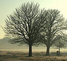 Winter trees - Richmond Park, London, UK by Alan Ferrari