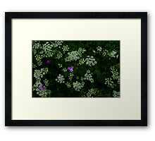 0359 - HDR Panorama - Queen Anne's Lace and Phlox Framed Print