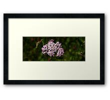 0372 - HDR Panorama - Flowers Framed Print