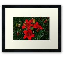 0375 - HDR Panorama - Lillies Framed Print