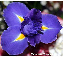 Delicate Iris Photographic Print