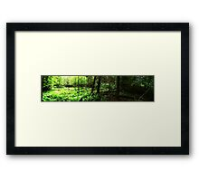 0395 - HDR Panorama - Woods Opening Framed Print
