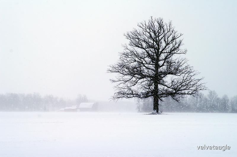 Blizzard Tree by velveteagle