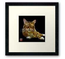 Maine Coon Cat - 3896 Framed Print